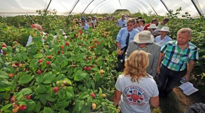 Raspberry Tunnel at FFF