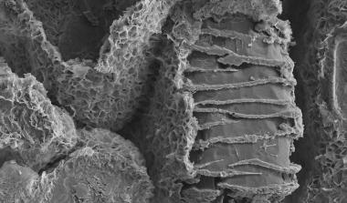 Geological sample in SEM
