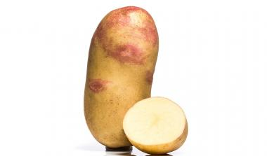 Vales sovereign potato