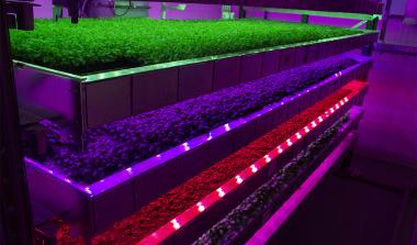 Intelligent Growth Solutions vertical farm